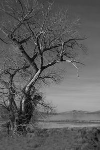 BW Fine art photography by Renee Ekleberry